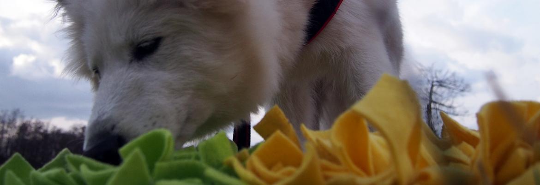 majówka z psem szczeniak