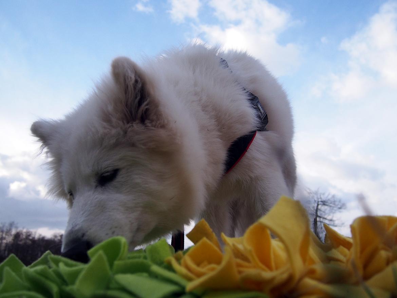 majówka z psem