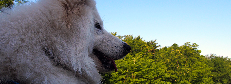 mantrailing dla psa 2