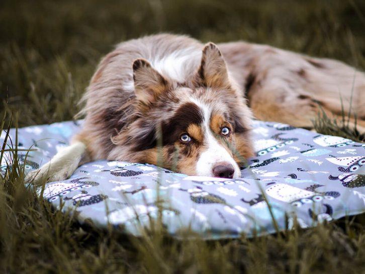 legowisko dla psa wykonane z unikalnego, wodoodpornego materiału