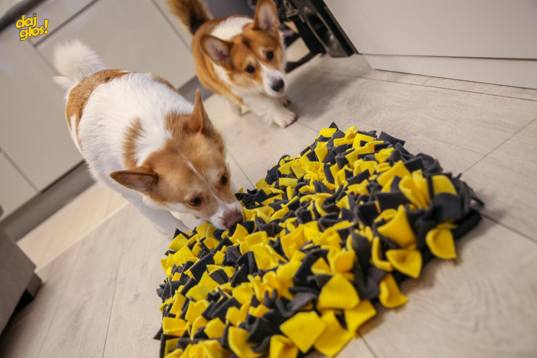 potrzebujące psy ze schroniska
