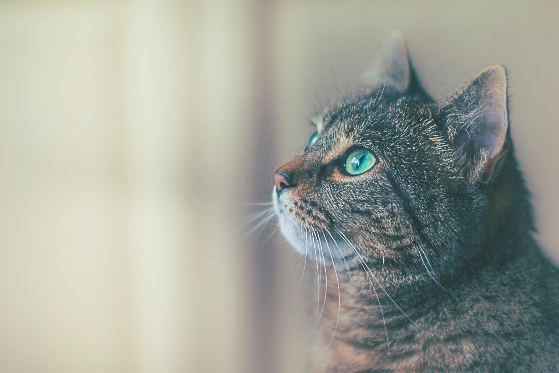 mata węchowa dla kota kociak