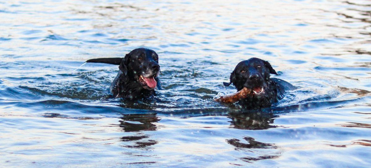 jak uspokoić psa stres i nerwy