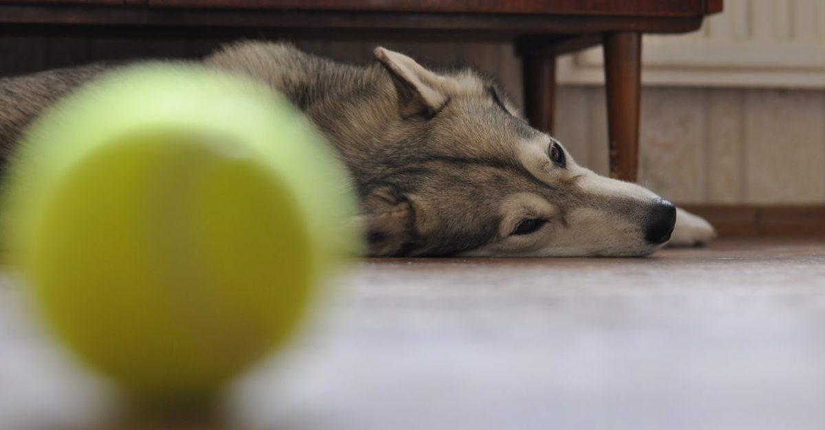 jak uspokoić psa nadpobudliwość