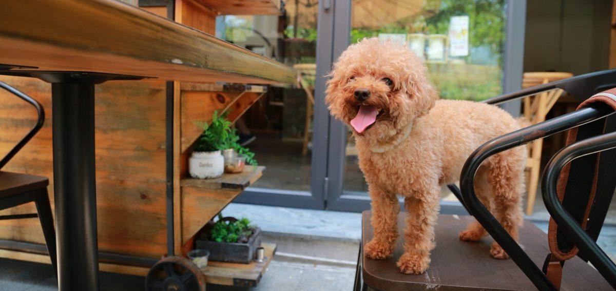naturalne gryzaki i przysmaki dla psa