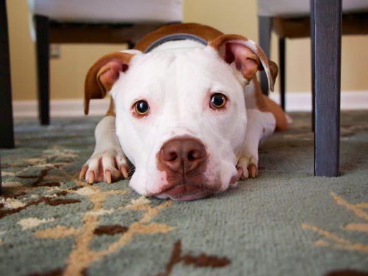 naturalne gryzaki dla psa