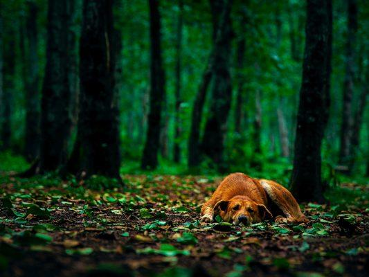 naturalne sposoby na kleszcze u psa