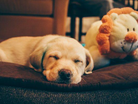 pies problemy z odpoczynkiem