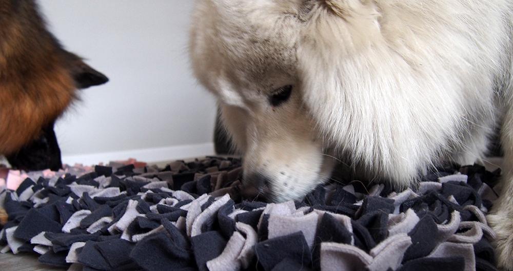 mata węchowa dla psa o nas