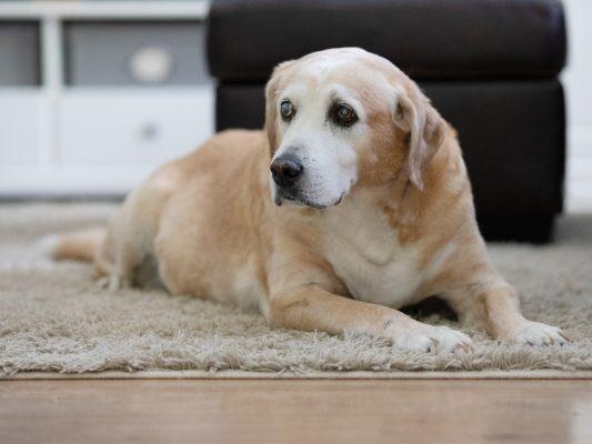 zabawka dla niewidomego psa